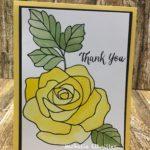 Rose Wonder Cards