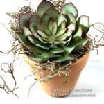 Stampin' UP! Cardstock Succulent in a Mini Pot